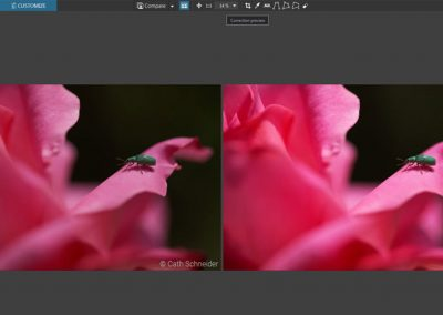 Mastering display and comparison modes in DxO OpticsPro 10